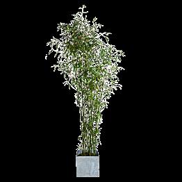 Bambou 1,9m avec cache-pot