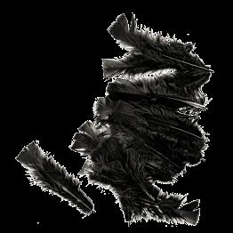 Plumes noires 14 cm